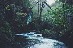 Trees, Water, Lake, Stream, Nature