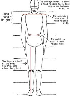 proportions for drawing human body