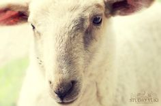 Baby Sheep, Lambs, Animal Photography, Mary, Easter, Spring, Awesome, Animals, Ideas