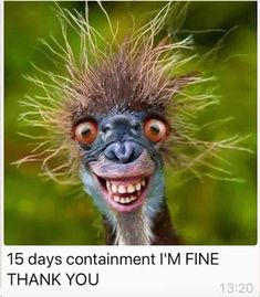 Freitag - Things that make me laugh 9gag Funny, Haha Funny, Funny Jokes, Hilarious, Funny Stuff, Funny Captions, Funny Animal Memes, Funny Animals, Cute Animals