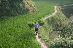 Hiking between villages in Guizhou
