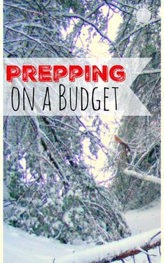 Prepping on a Budget. The Penny-Pinching Prepper. The Flying Couponer | Family. Travel. Saving Money.