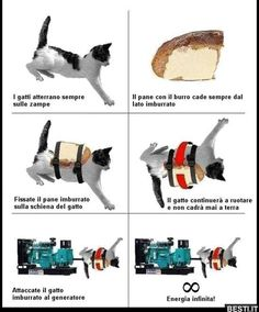 Funny pictures about Perpetual motion. Oh, and cool pics about Perpetual motion. Also, Perpetual motion photos. Funny Cute, The Funny, Ingenieur Humor, Top Fails, Cat Bread, Fall Cats, Haha, Perpetual Motion, Nerdy