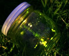 fireflies/ lightning bugs in jars