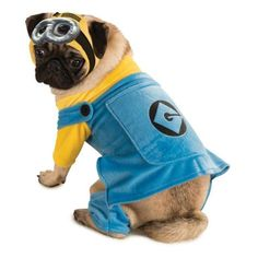 Despicable Me Pet Costume #shopko