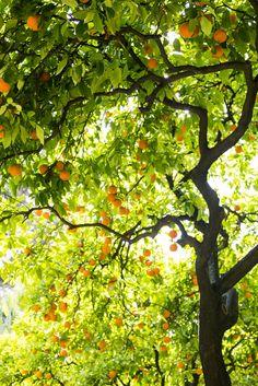 Seville, Spain  ZsaZsa Bellagio – Like No Other: Ohhh… Orange.
