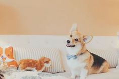 Having a Corgi as a Realtor Might Be the Best Way to Sell a House | WOOFipedia by The American Kennel Club
