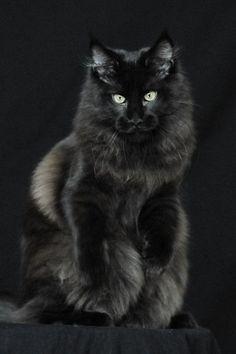 Шикарный чёрный ману