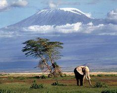 Parque de Amboseli, santuario de elefantes con el Kilimanjaro al fondo. Kenia.