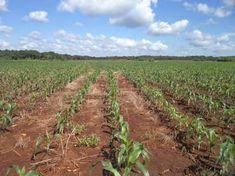 Terrenos ejido en venta para inversión. Yucatan.  En venta terrenos ejidales en Yucatán, Campeche, Chiapas y Quintana Roo para inversión y obtención ...  http://merida.evisos.com.mx/terrenos-ejido-en-venta-para-inversion-yucatan-id-538159