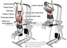 Machine-assisted close neutral-grip pull-up. A compound exercise. Synergists: Teres Major Rhomboids Middle and Lower Trapezius Posterior Deltoid Lower Pectoralis Major Pectoralis Minor Levator Scapulae Brachialis a Gym Workout Tips, Weight Training Workouts, Plank Workout, No Equipment Workout, Training Exercises, Fitness Exercises, Assisted Pull Up Machine, Assisted Pull Ups, Good Back Workouts