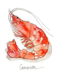 Sealife Shrimp Camarón Watercolor Print