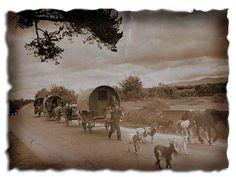 Magic Horse Ranch - History of Gypsy Horses