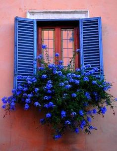 photo inspiration for a window card: cobalt blue shutters and flowers against a rose colored house ... beautiful!!