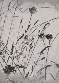 Images of Nether Edge: Snapdragon. Journey, Blurred Background, Abstract Flowers, Mother Earth, Fiber Art, Printmaking, Art Photography, Art Pieces, Illustration Art