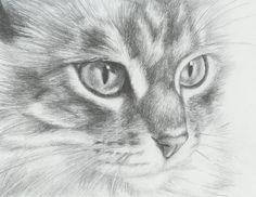 Cat Pencil Drawing  http://hative.com/cute-cat-drawings-showcase/