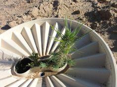 Proyecto, Desiertos Verdes