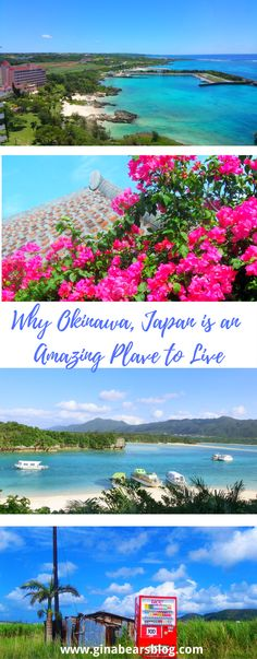 Okinawa Japan is an Awesome Place to Live http://ginabearsblog.com/2016/01/okinawa-japan-is-an-awesome-place-to-live/