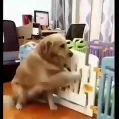 Look At This Proud Momma Feeding Her Pups - You are in the right place about minimalist architecture Here we offer you the most beautiful pict - Cute Funny Animals, Cute Baby Animals, Funny Dogs, Animals And Pets, Cute Cats, Cute Puppies, Dogs And Puppies, Animal Antics, Cute Animal Videos