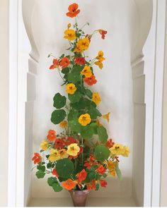 via Nasturtiums are my favorite summer flowers whether they are blooming or not as I adore their round leaves t. Garden Trellis, Garden Plants, Indoor Plants, House Plants, Garden Seeds, Beautiful Gardens, Beautiful Flowers, Climbing Flowers, Perfect Plants