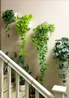 Indoor Gardens For Your Home Room With Plants, House Plants Decor, Plant Decor, House Plants Hanging, Hanging Plant Wall, Plant Rooms, Hanging Plants Outdoor, Indoor Plant Wall, Indoor Plants