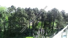 21000€. Park view furnished studio apartment for sale in Amadeus XI in tranquil area 400 meters from the beach in Sunny beach, Bulgaria - Sunnybeach Properties - Real Estates in Bulgaria. Apartments, Villas, Houses, Land in Sunny Beach, Nesebar, Ravda ...