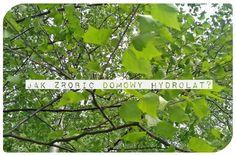 Świetny krem pod oczy dostępny w aptece. Natural Beauty, Herbs, Nature, Plants, Kefir, Naturaleza, Herb, Plant, Nature Illustration