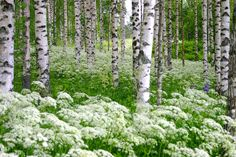 Nature and summer in Finland