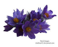Αποτέλεσμα εικόνας για flores