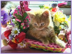 Cute Easter Kitty Cat Kitten in Home Garden Art Decor with Easter Eggs, Stuffed Bunny Rabbits & Spring Flower Basket with Daffodils & Tulips on an Easter Holiday Weekend in Canada. Cute Kitty Cat Kitten ...Kitties Cats Kittens...Cute Kitty Cat Kitten... by Chantal PhotoPix, via Flickr