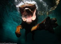 My what a big paw you have underwater.  - Enjoy :) ActiveDogToys.com