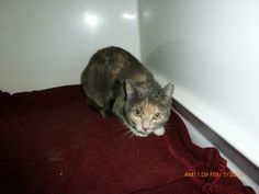Mount Vernon, OH. Batgirl. URGENT! UPDATE: No longer listed, status unknown.