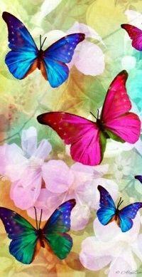 Аватар вконтакте Рисованные яркие бабочки