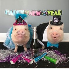 "prissy_pig ThOINKs for a wonderful year and cheers to a happy and healthy What are your plans for New Year's Eve? Pop wants to ""pop"" open some champagne and ""swine and dine"" the whole family! Cute Pigs, Always Smile, All Things Cute, Animal Party, New Years Eve, Champagne, Cute Animals, Lily, Pop"