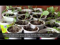 Begonia, Garden, Plants, Youtube, Garten, Lawn And Garden, Gardens, Plant, Gardening