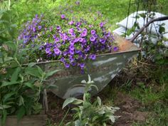 old metal wagon of flowers!