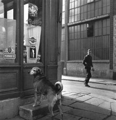 Robert Doisneau // : Paris, The Bistros - Child and dog face to face behind the entrance door, 1953. Also ( http://www.gettyimages.co.uk/detail/news-photo/paris-the-bistros-child-and-dog-face-to-face-behind-the-news-photo/121510842