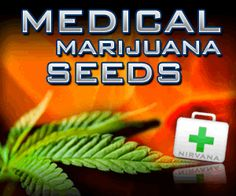 Cannabis Seeds.. Great testimonial by a lung cancer surviver..