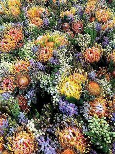Baardkeerdersbos ..Gansbaai... Cobus Germishuys South Africa, Plants, Plant, Planets