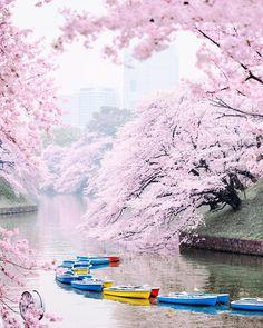 Chidorigafuchi boats (Tokyo) during cherry blossom season, 2015.  #sakura by Luke Shadbolt