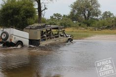 Botswanan safari Safari