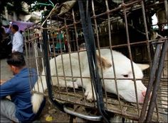 Sign the petition against the Yulin Dog Meat Festival ! PLEA... - Care2 News Network