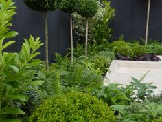 Ealing show garden, Buxus sempervirens balls, ferns and evergreen standards.