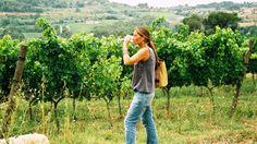 ACEVIN acogerá 5 nuevas rutas del vino: Campo de Cariñena, Rueda, Txacolí de Alava, Yecla y Ronda