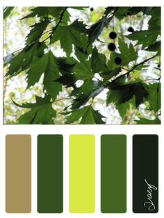 forest of ephesus colour palette