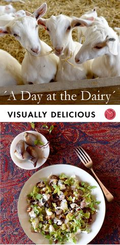 A Day at the Dairy — Visually Delicious Create A Recipe, Recipe Cards, Wine Recipes, Ash, Dairy, Website, Wood, Beautiful, Grey
