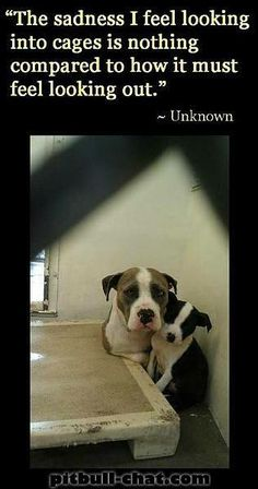 Breaks my heart. Please adopt this wonderful breed. Give them the chance they deserve. They only want to love you.