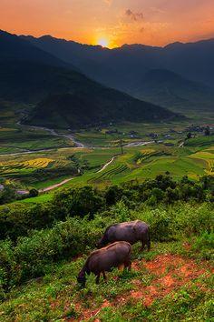 Last Light Tule, Mu Cang Chai, Vietnam