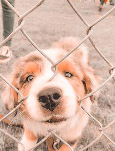 Super Cute Puppies, Cute Baby Dogs, Cute Little Puppies, Baby Animals Super Cute, Cute Dogs And Puppies, Cute Little Animals, Cute Funny Animals, Doggies, Cute Puppy Pics