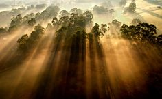 Morning Mist - Yarra Valley, Victoria, Australia - Steve Lacy